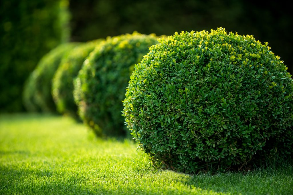 lawn care services arlington tx