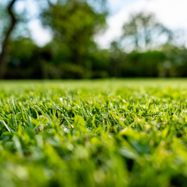 lawn care arlington tx